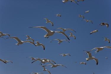 Seagull 001.jpg